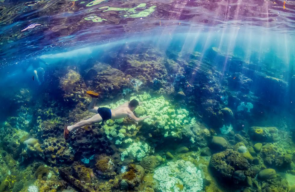 Du khách lặn ngắm san hô